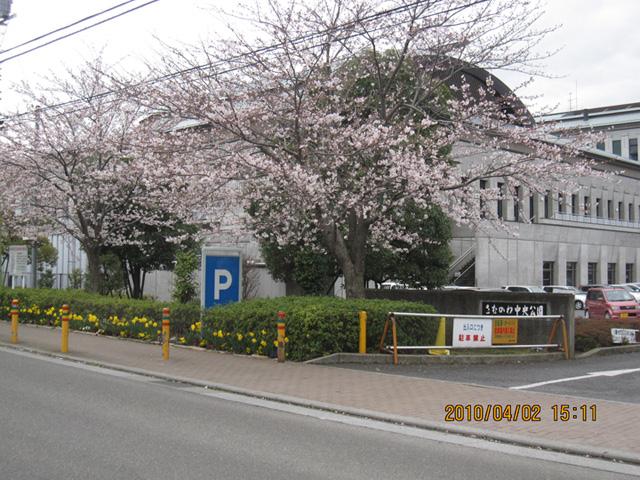 Sakuratyuuou