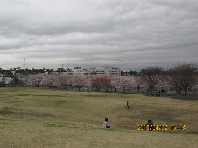 Sakuratyuuou1